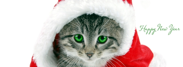 cat-new-year-fb-timeline-cover